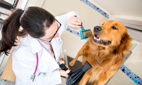 Westcreek Animal Clinic: Dog Grooming