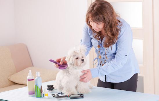 Dog_grooming_i
