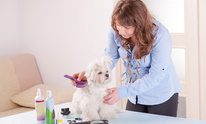 Ruby's Pet Shop & Spa: Dog Grooming