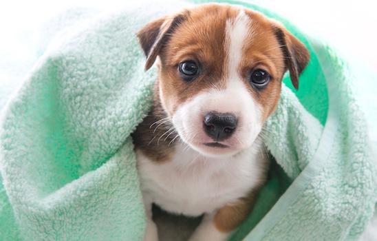 Go go spa self serve dog wash rosemead ca dog boarding book online solutioingenieria Gallery