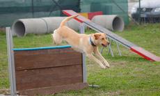 Dog training b