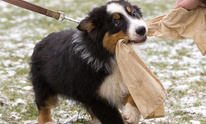 B & B Professional Dog Training: Dog Training