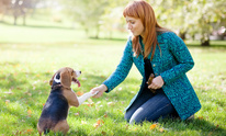 Abode Home Pet Care: Dog Training