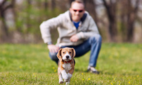 Hampton Cove Animal Hospital: Dog Training