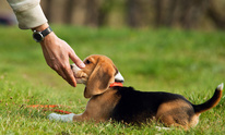Picture Perfect Pet Services: Dog Training