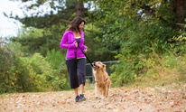 Lisa's Dog Walking Svc: Dog Training
