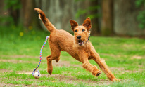 Meadowbrook Animal Clinic: Dog Training