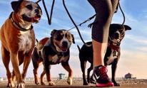 HB Dog Walk: Pet Sitting