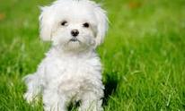 Chets Dog Grooming: Dog Walking