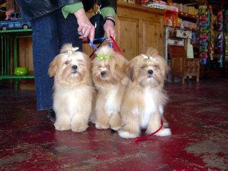 Fluffy-trio