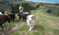 Coastside Pets: Dog Walking