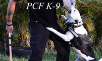 PCFK9: Dog Training