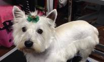 Because We Care Dog And Cat Grooming Hilary King: Dog Grooming