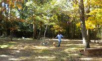 Tysons Kennel: Dog Walking