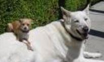FurTheLoveOfYourPet: Dog Walking