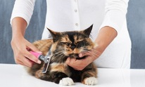 Glamour Paws: Cat Grooming