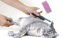 Dog Care Samson: Cat Grooming