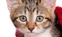 East El Paso Animal Hospital: Cat Grooming