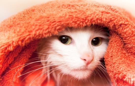 Cat_grooming_4