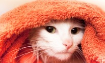 Pampered Pets: Cat Grooming