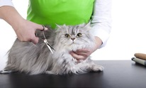 Who Let The Dogs Out: Cat Grooming