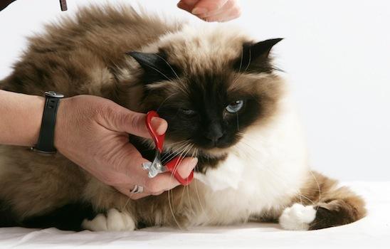 Cat_grooming_9