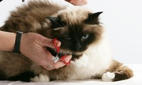 Arlington Heights Animal Hospital: Cat Grooming