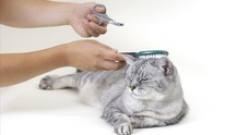 Hefner Road Animal Hospital: Cat Grooming