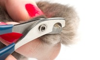 Paws & Whiskers: Cat Grooming