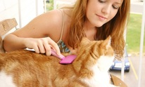 Bob The Big Dog Pet Sitting: Cat Grooming