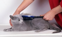 The Nautical Dog: Cat Grooming