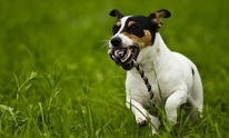 Go Play Pets pet sitting, dog walking veterinary service Fairhope Alabama: Dog Walking