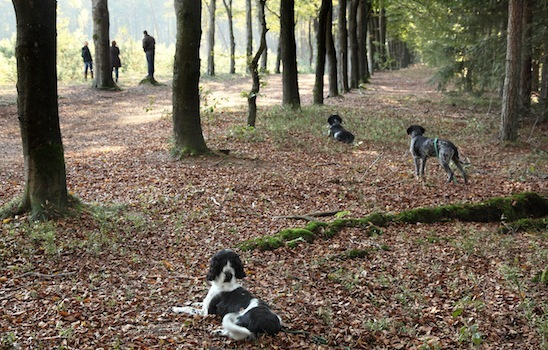 Dog_walking_12