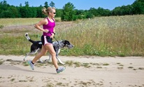 Calm Canines Dog Training: Dog Walking