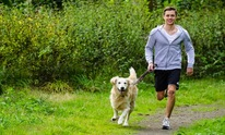 NorthStar Pet Services: Dog Walking