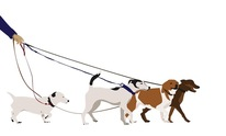 West Hollywood Dog Walking: Dog Walking