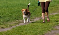 P's and Q's Dog Training: Dog Walking