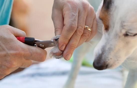 Dog_grooming_13