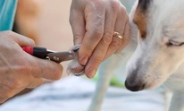 Pawsitively Love: Dog Grooming