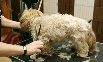 Glamour Paws: Dog Grooming
