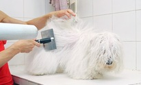 Aunt Jackie's Pet Salon: Dog Grooming