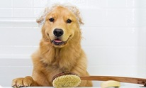 Ruff 'n Roll: Dog Grooming