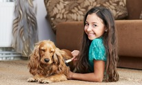 Abbey's Furry Friends: Dog Grooming