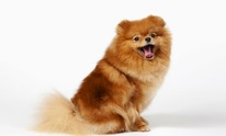 Mechelle's Pet Salon: Dog Grooming