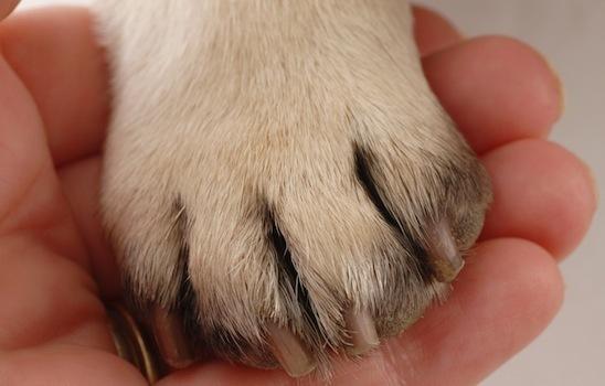 Dog_grooming_4