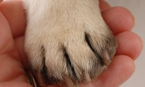 The Perfect Paw: Dog Grooming