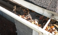 New Beginnings Window & Solar Cleaning Services: Gutter Cleaning