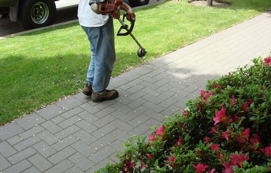 Lawn_mowing_10