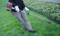 Tree and Horticultural Management Services: Lawn Mowing