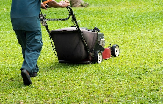 Lawn_mowing_12